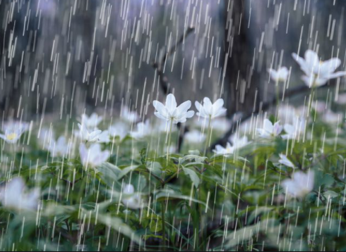 Облачно со врнежи од дожд, на планините со врнежи од снег