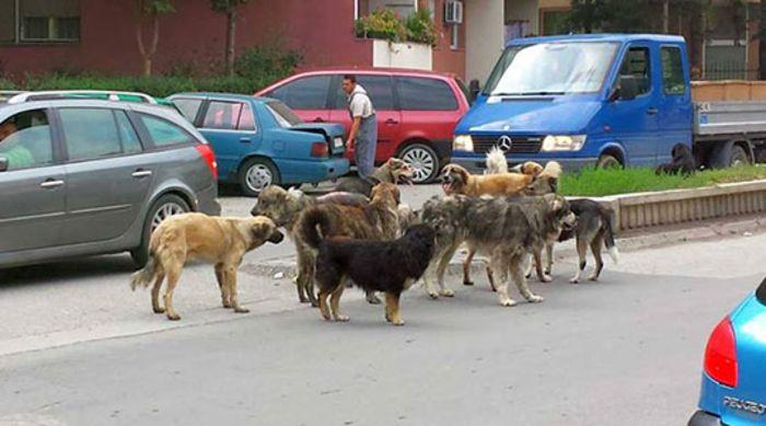 Кучиња скитници нападнале малолетнички во Чаир и Гази Баба