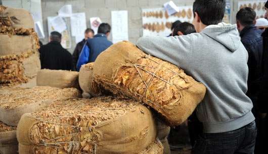 Владата донесе одлука за откуп на 700 тони вишок тутун