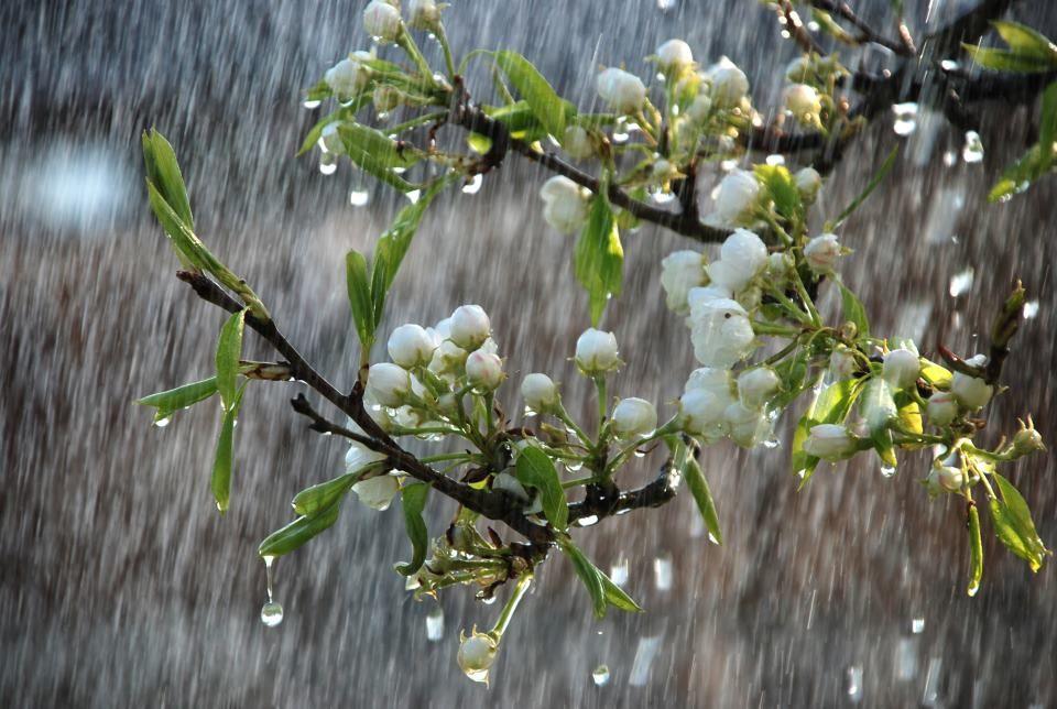 Облачно и студено со врнежи од дожд, на планините снег