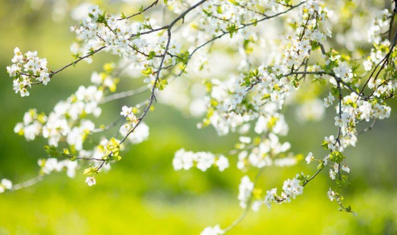 Денеска календарски започнува пролетта