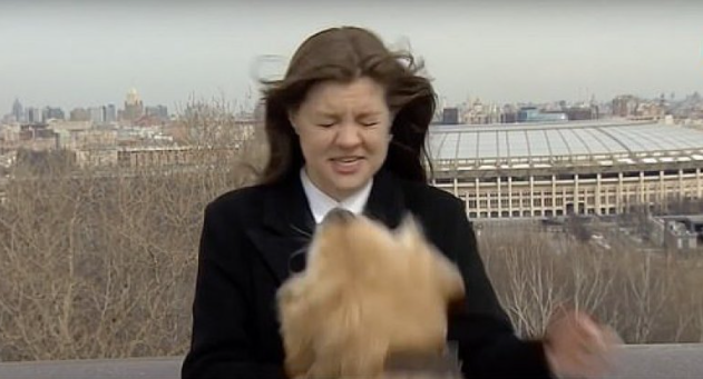 (ВИДЕО) Лабрадор го украде микрофонот на новинарката во програма во живо