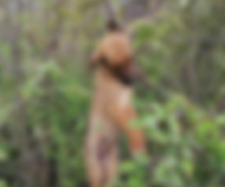 (ВОЗНЕМИРУВАЧКИ ФОТОГРАФИИ) Мало куче обесено на дрво во Демир Капија