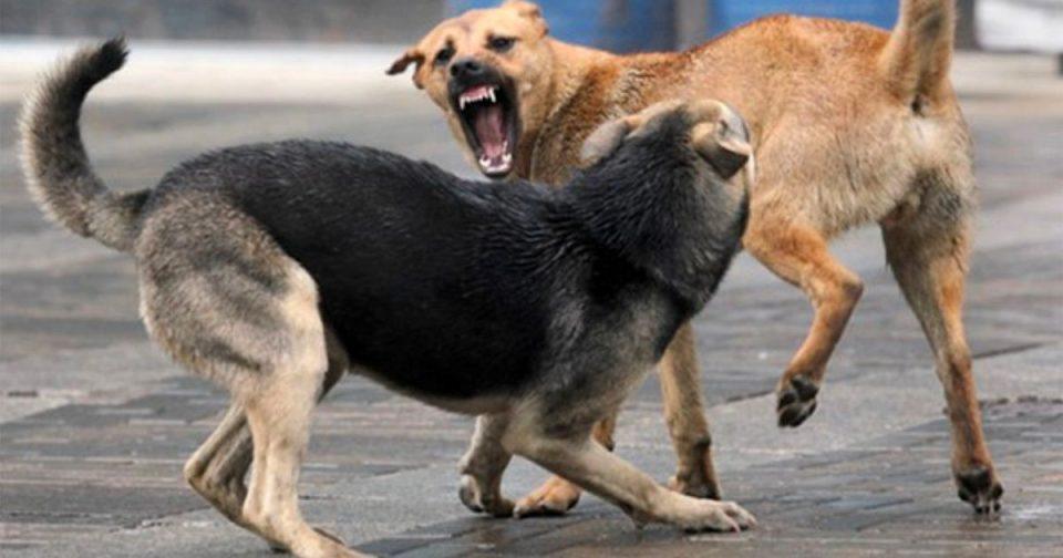 Скопјани каснати од кучиња скитници