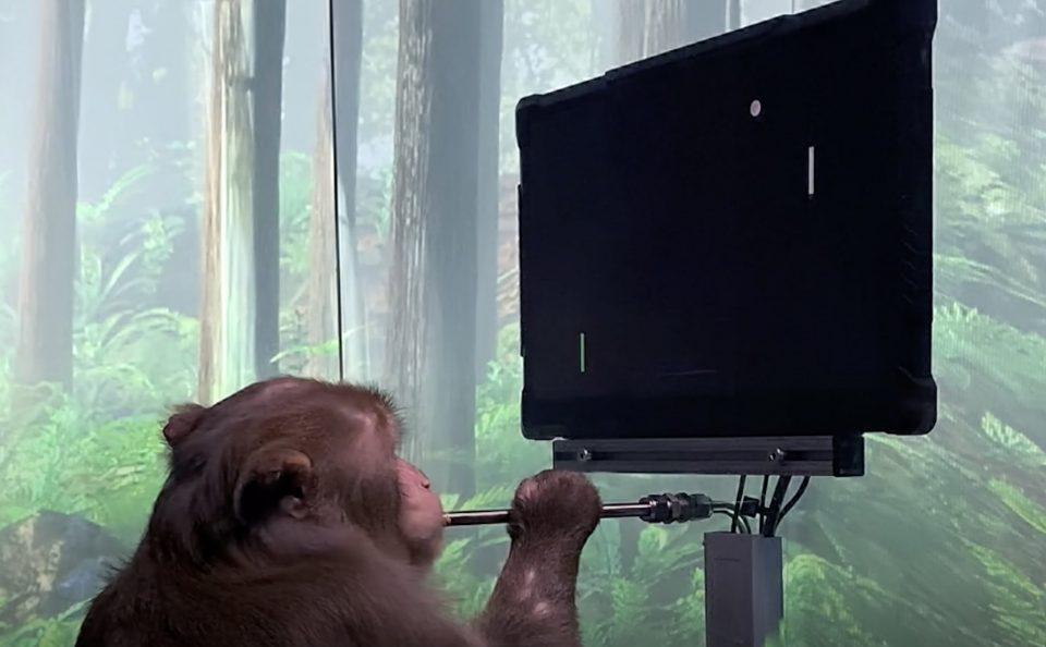 (ВИДЕО) Благодарение на чип, мајмун со мислите управува видео игра
