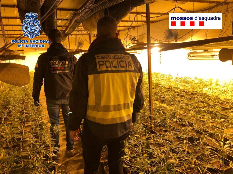 (ФОТО) Шпанската полиција разби една од најголемите кинески нарко-банди