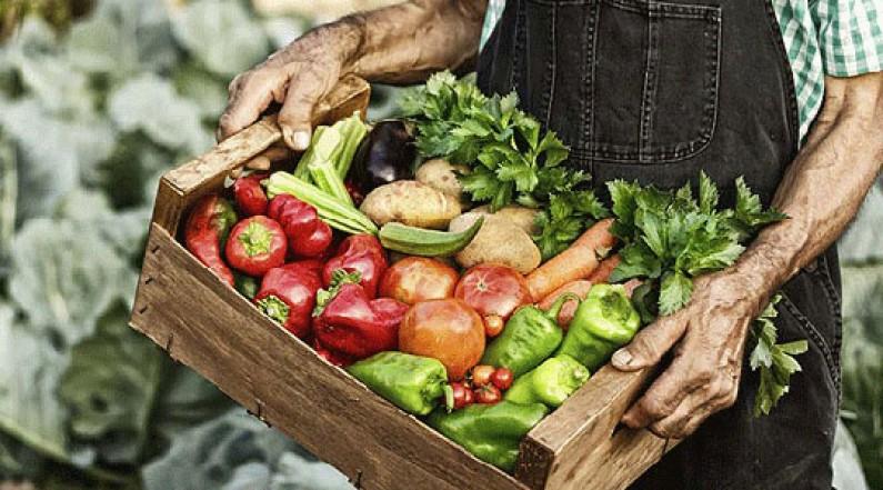 Земјоделците на маки: Пласманот и ниските откупни цени се проблем број еден