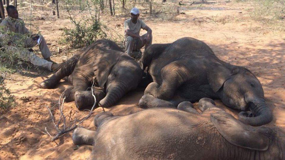 (ВИДЕО) ТРАГЕДИЈА: Молња уби стадо од 18 индиски слонови