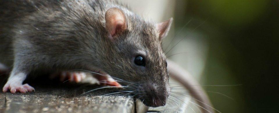 (ФОТО) Глувци и инсекти низ центарот на градот