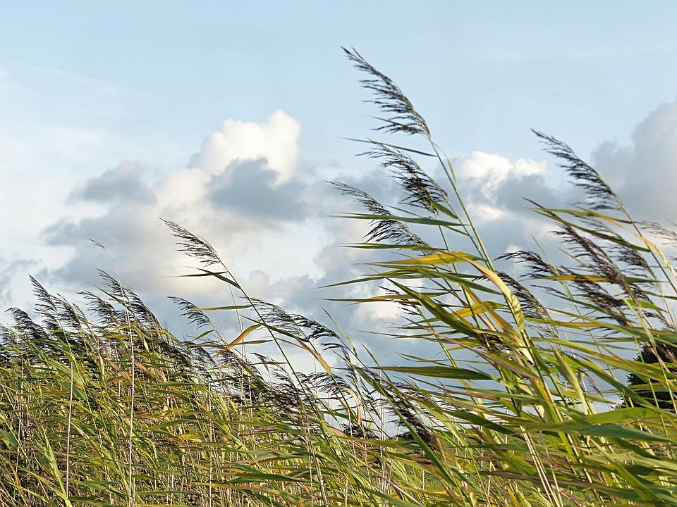 Сончево и ветровито време