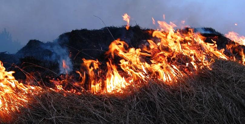 """Тинејџерки запалиле  речиси 200 тони слама додека се обидувале да снимат видео за """"ТикТок"""""""