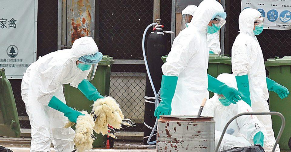 Птичји грип откриен во пет косовски фарми