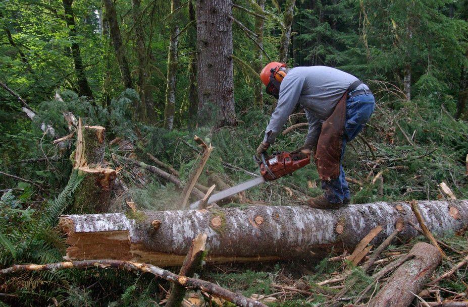 Скопјанец тешко повреден при сечење дрва во Кочани