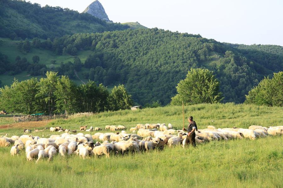 Продолжување на рокот за аплицирање за субвенции во сточарството, бара ветеринарната комора