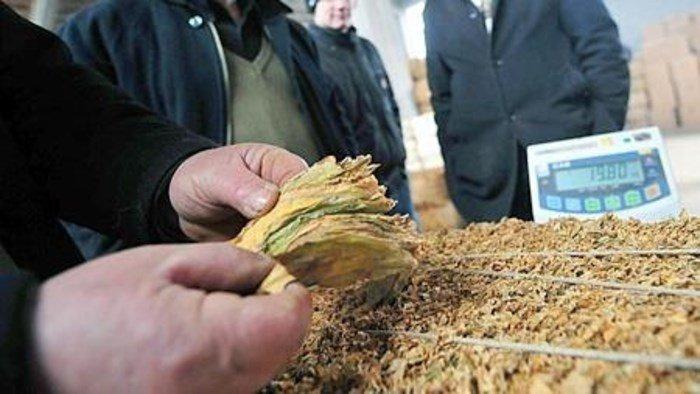 Исплатени субвенциите за произведен и предаден тутун од реколта 2020 година