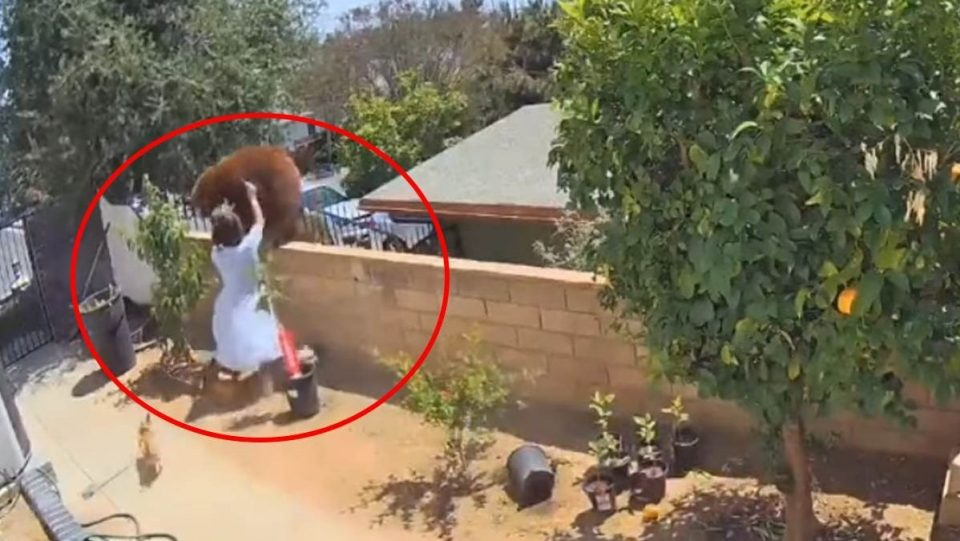 (ВИДЕО) Е ова е храброст: Жена со голи раце истера мечка
