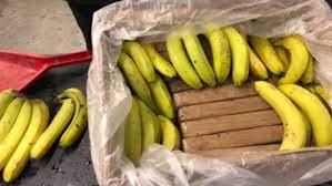 (ВИДЕО) Италијанската полиција заплени еден тон кокаин сокриен во контејнери со банани