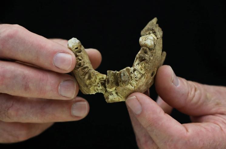 Нови откритија за еволуцијата: Во Израел пронајдени коски од непознат праисториски човек