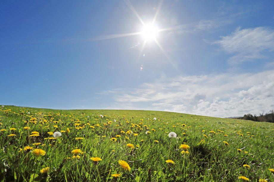 Утре температури на 40 степени