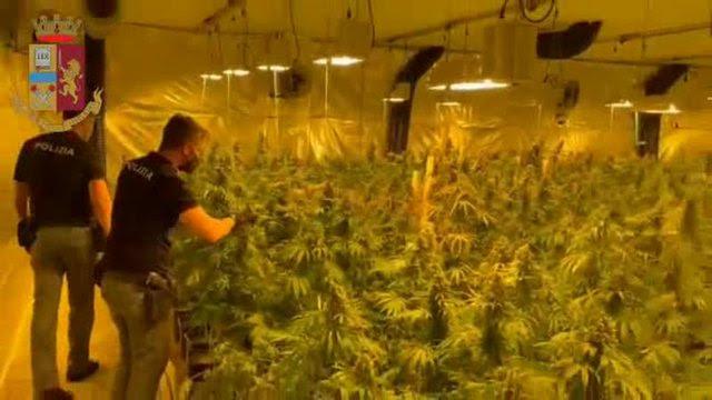 Албанци во Италија одгледувале марихуана во пластеници