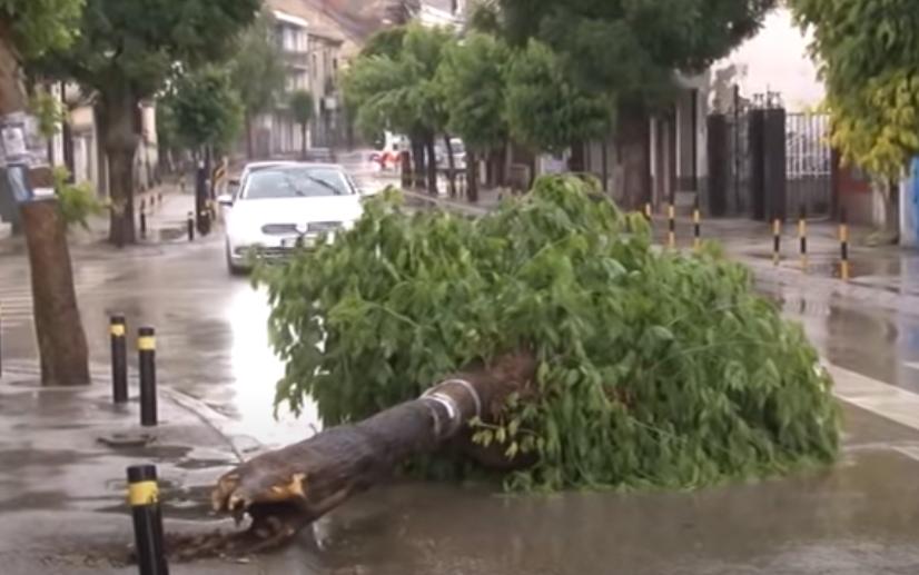 (ВИДЕО) Откорнати дрвја и вода до колена, силно невреме во Врање