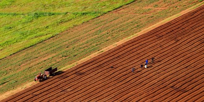 За развој на дигитализација во земјоделството, четири компании добија финансиска поддршка од Фонд за иновации