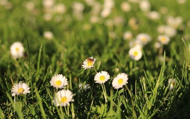 Совети за третирање на убод од пчела