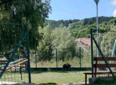 """(ФОТО) Млада дива свиња """"си игра"""" во делчевскиот Детски парк"""