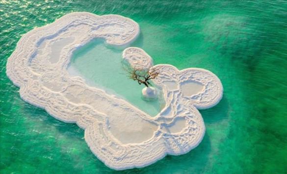 Израсна дрво среде Мртвото Море
