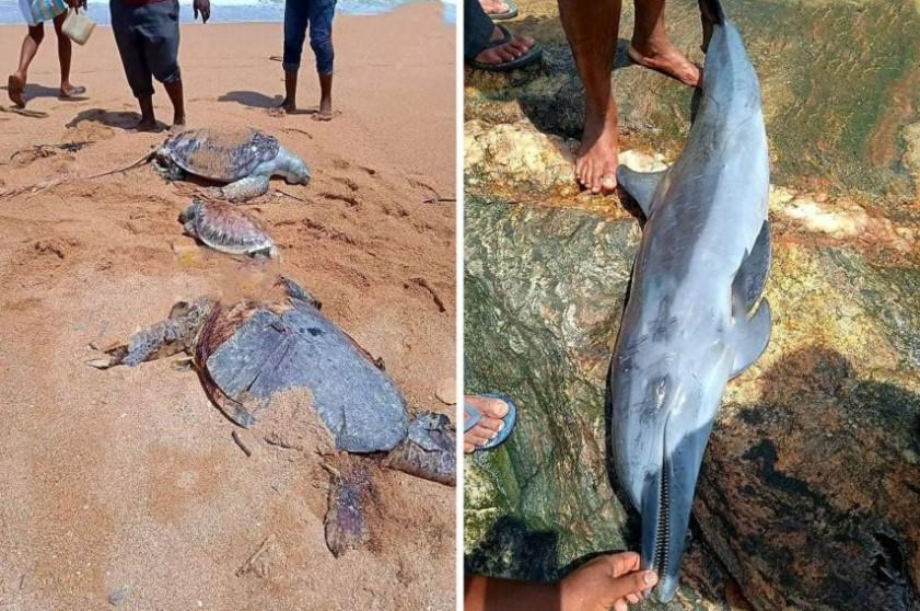 Геноцид во море, ваква штета не поми морскиот свет – убиени стотици животни поради истурени хемикалии