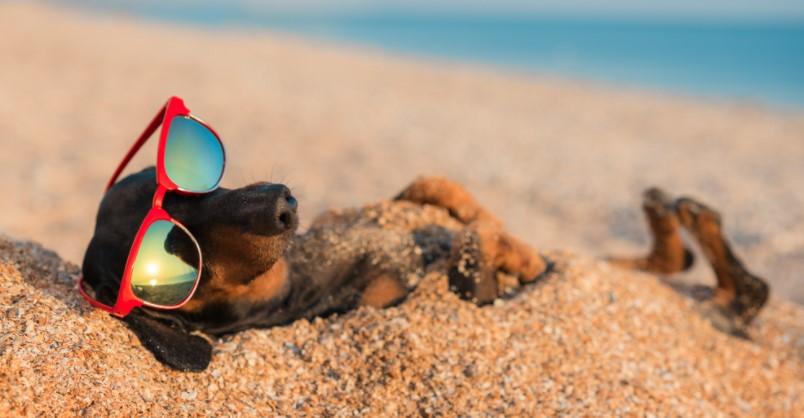 Совети за оние кои што патуваат со домашен миленик