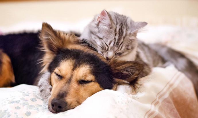 Работи кои мора да ги знаете ако сакате да посвоите мачe или куче