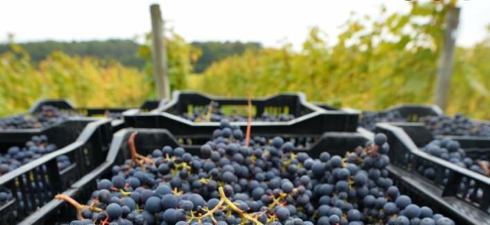 Во Република Српска забранет увоз на грозје од Македонија