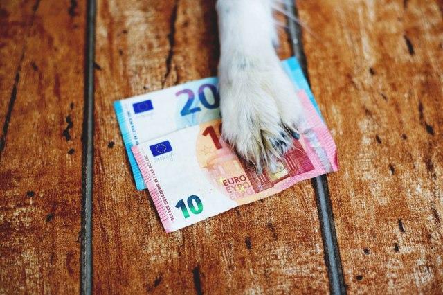 Во оваа земја ако сакате да чувате куче, ќе платите данок од 5 до 200 евра